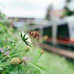 Artenvielfalt an Straßenbahngleisen und U-Bahn-Trassen